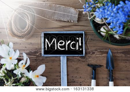 Sign With French Text Merci Means Thank You. Sunny Spring Flowers Like Grape Hyacinth And Crocus. Gardening Tools Like Rake And Shovel. Hemp Fabric Ribbon. Aged Wooden Background