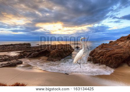Sunset over the rocks at Pearl Street Beach with a great egret, Ardea alba, in Laguna Beach, California, USA