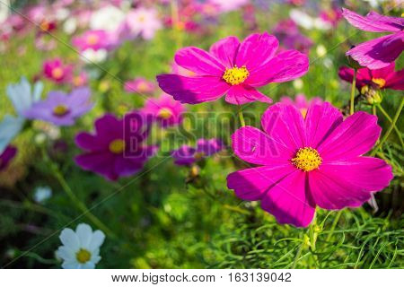 Beautiful purple flowers - for a background.