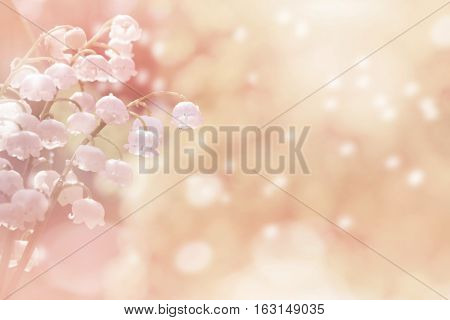 Natural background with lilies in pink tones. Spring background with lilies of the valley in drops of water after rain.