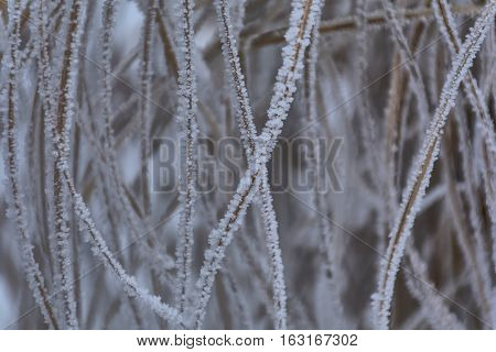Grass covered with hoar frost, close up. Grass covered with frost in the cold winter day. Background texture of dry grass covered with hoarfrost