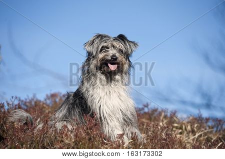 Portrait of cute little smiling dog. It is beautiful sunny day with a blue sky where is place for some nice quote text.