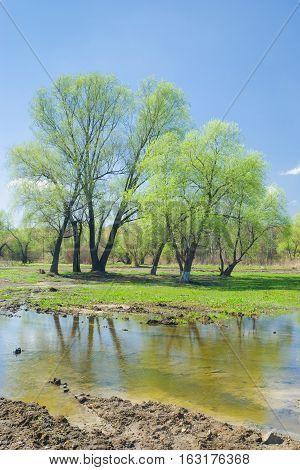 Spring tide in Ukrainian rural area .