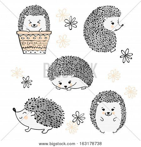 Set of cute hedgehogs isolate on white. Vector illustration.