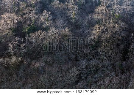 Bare Winter trees on the slopes of Three Cliffs Valley opposite Pennard Castle on the Gower peninsula, Swansea, UK.