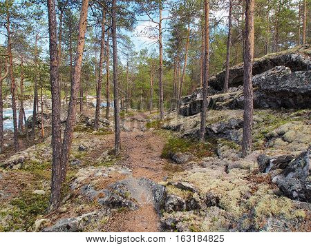 Tourist trail going up the mountain side through a pine forest with moss covered rocks and boulders in Norway on a sunny summer day