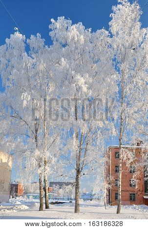 Trees with white frost in frosty weather. Winter. Russia
