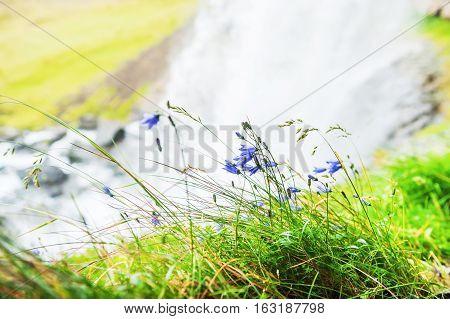 Bluebells Near The Waterfall