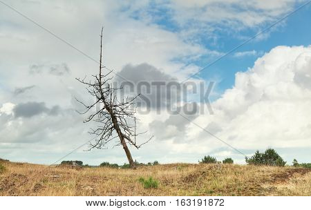 dry tree over stormy sky in summer