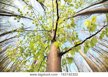 wide angle view on tree in forest over sky