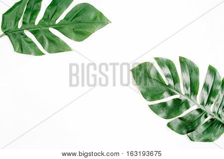 Tropical palm leaves. Flat lay top view