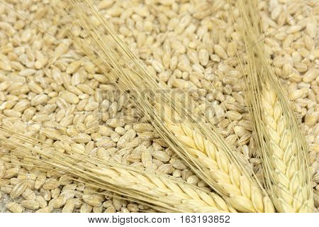 3 spikelets of wheat are scattered on the grain groats harvest