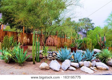 Drought tolerant yard including chaparral plants and cacti beside rocks and sand with a rustic wooden fence beyond taken at a house in a Southern California residential neighborhood