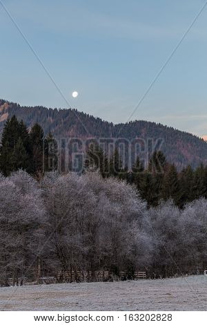 A forest and field with the moon rising