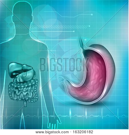Stomach Cross Section Anatomy And Surrounding Organs And Normal Cardiogram At The Bottom, Abstract T