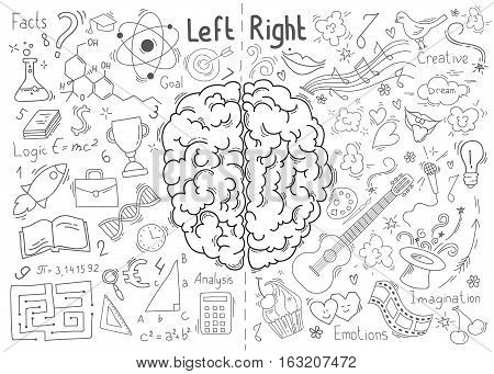 Concept of the human brain. Left and right brain functions concept
