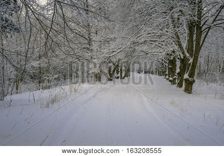 Snow covered park with hoar frosted trees and alley