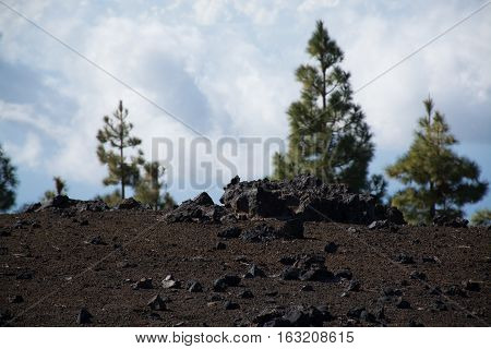 Teide National Park Tenerife - the most spectacular travel destination lava and Canary Island pine tree