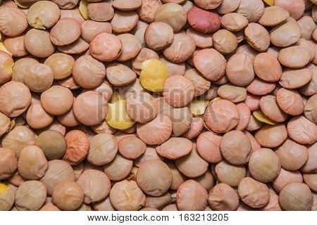 uncooked green lentil backdrop, background or texture