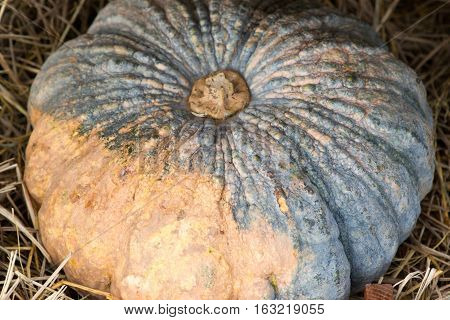 The pumpkin on the chaff basket in market