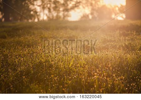 Dew on the grass drops on the green grass warm sunshine morning came dawn
