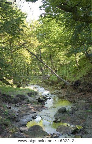 The Moors Creek