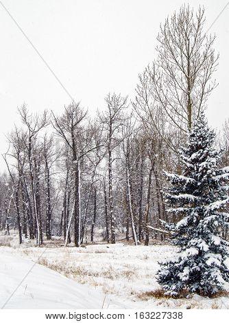 Landscape scene of Canadian Rockies foothills farmland during heavy snowfall