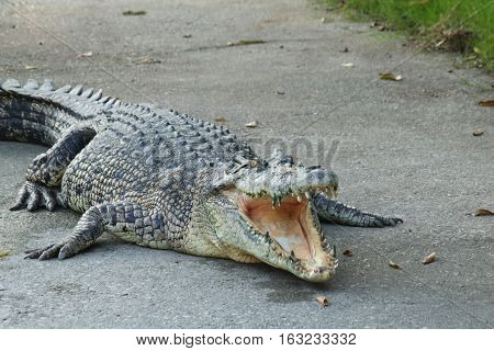 Crocodile Farm In Thailand