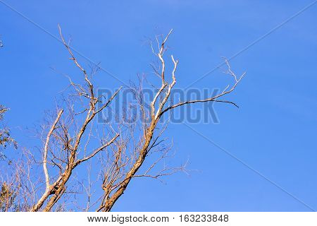 Single Old And Dead Tree Branch