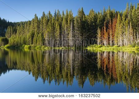 Beautiful mountain lake with tree line and reflections in the Tahoe Basin