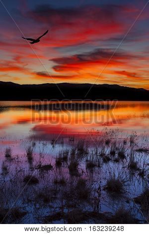 Swan Lake Nevada. Sunset shot with bird in colorful sky.