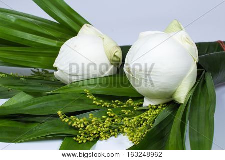 the water lily for worship isolated white background