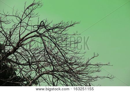 Silhouette of tree branches green background. Silhouette nature branches tree background