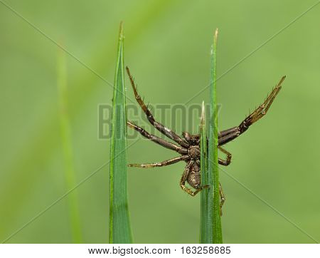 Spider On Blades