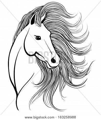 Vector sketch of elegant horse's head with mane