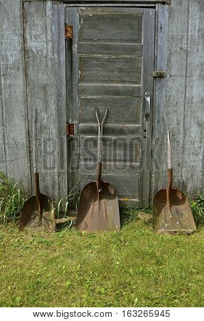 Three old rusty shovel with broken handles lean against a door of an weathered wood shed.