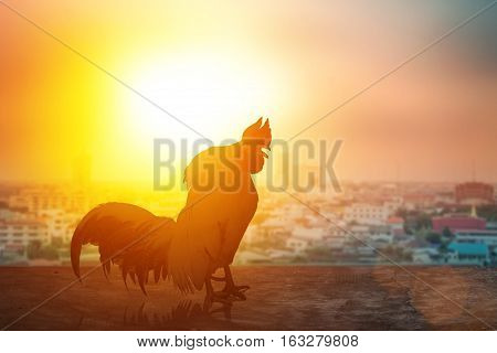 Silhouette chicken sunset. 2017 new year design thailand or background.Standing on the wooden floor and the big city.