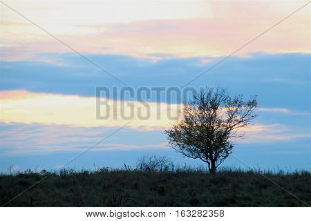 Lone tree in siluette to the blue evening sky