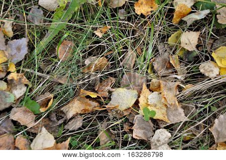 Autumn nature. Little brown frog on a background of yellow leaves green and dry grass