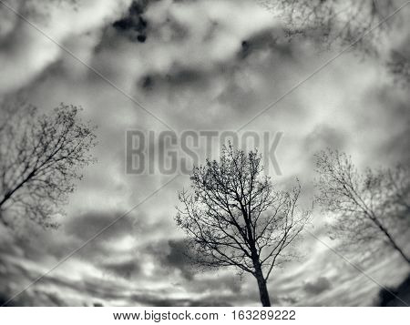 black and white image with  and distortion like in a nightmare with trees and clouds.