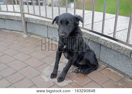 Stray dog is sitting on the pavement. Pets