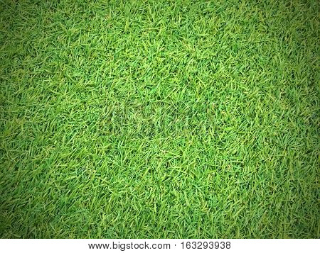Green grass texture background, artificial grass grass