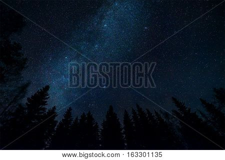 Milky way and tree tops in starry night landscape