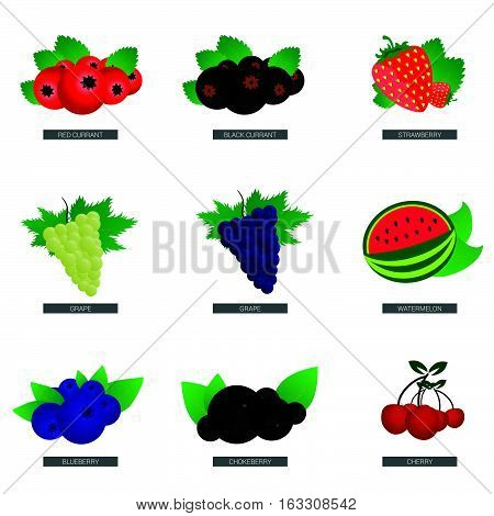 Fruit Fresh Food Set Illustration In Colorful