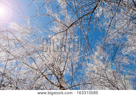 Branching tree covered with snow on the side of the road on a background of blue sky and clouds. Winter trees. Frost on a Tree branches. Frosty winter day. Winter landscape. Frost frost on the trees.