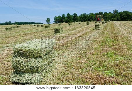 Rectangular Bales of Hay Being Loaded on Wagon