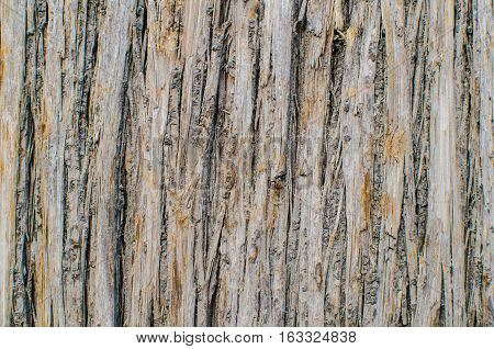 Abstract Surfact of Brown Skin Tree. Can use for Texture Wallpaper and Background.
