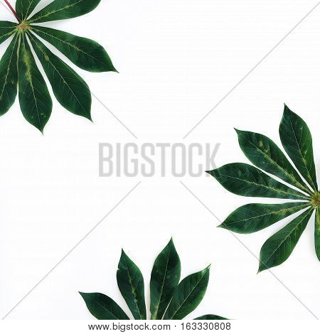Green palm leaves frame on white background. Flat lay top view