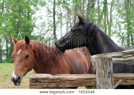 Horses On The Blue Ridge Parkway