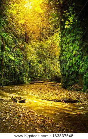 Fern Canyon California Prairie Creek Redwoods